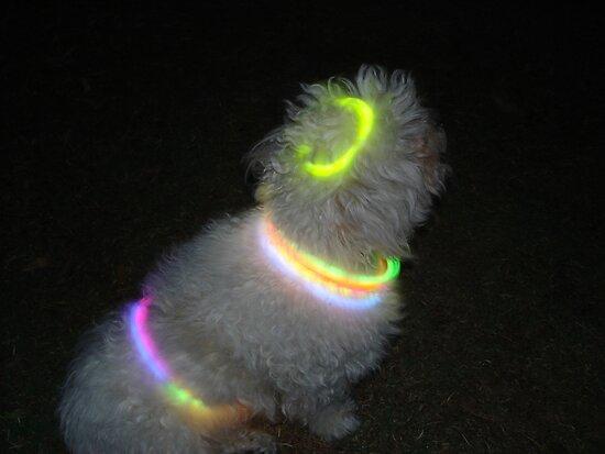 Glow Dog by Sharon Stevens