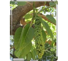 Fruit of the elephant tree iPad Case/Skin