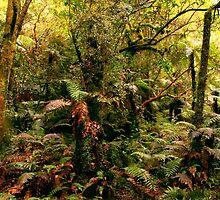 Rainforest New Zealand by Angelika  Vogel