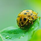 Ladybird by goingdown