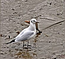 The Mud flats of the Truro river. by Malcolm Chant