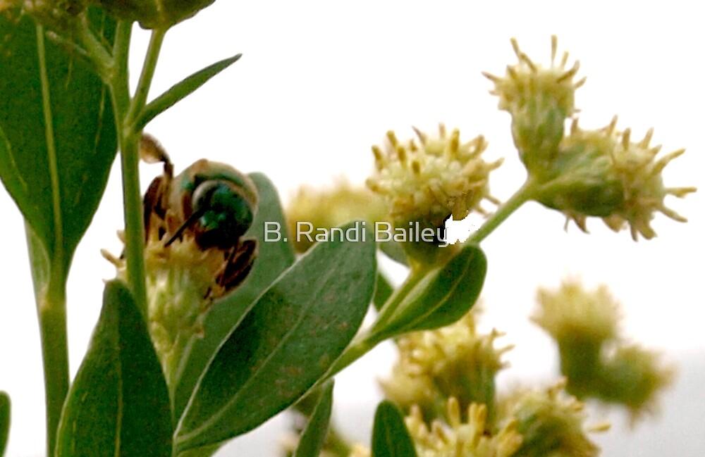 Metallic green bee by ♥⊱ B. Randi Bailey
