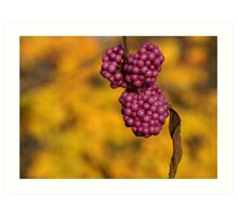 pink berries Art Print