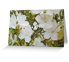 The front yard blooms Greeting Card