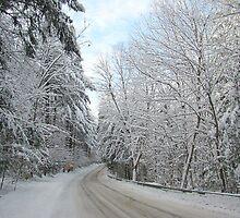 Heavy wet snow by Linda Marlowe