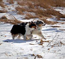 Running by Anne Smyth