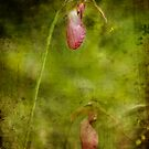 Ladyslipper by VLFatum