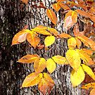 The Beech Leaves Are Beginning To Turn! by mlou