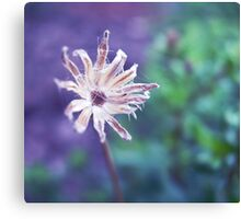 March melody Canvas Print