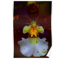 Orchid Glow Poster