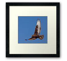 Dark morph Ferruginous Hawk Framed Print