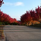 Fall colors 2 by flyfish70