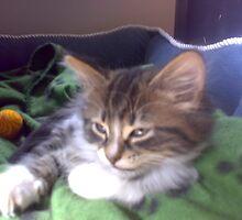 My Cat Bo-Sun by rangafox