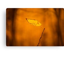 The Last Leaf of Autumn Canvas Print