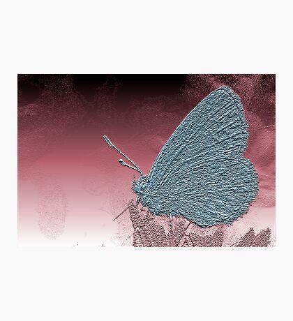 Metallica Moth surveys an alien world Photographic Print