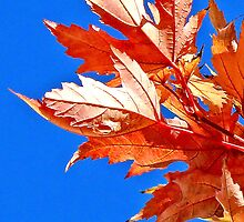 incomplete autumn by terezadelpilar~ art & architecture
