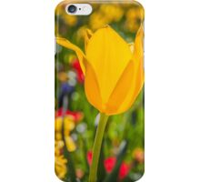 Golden Tulip iPhone Case/Skin