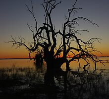 Coongie Lakes sunset by BigRed