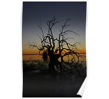 Coongie Lakes sunset Poster