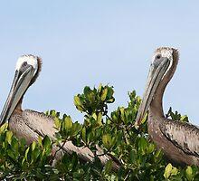 Pelican's Roost by Karen  Moore