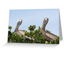 Pelican's Roost Greeting Card