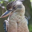 Blue Winged Kookaburra by Steve Bullock