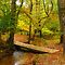 Forest magic (photo)