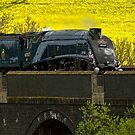 Sir Nigel Gresley at Somerton Viaduct by SWEEPER