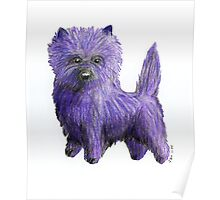 Purple Cairn Terrier Poster