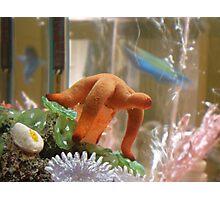 Starfish Photographic Print