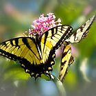 Butterfly in the Mist by Trudy Wilkerson