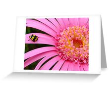 Pink Gerbera with yellow ladybug Greeting Card