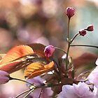 Cherry Buds by rennaisance