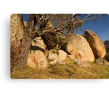 Trunk and Rocks Canvas Print