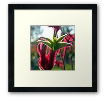 Exhaulted Furry Red  Framed Print