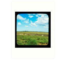 Cattle Walk the Line Art Print