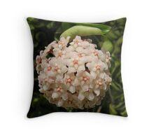 Hoya ball of flowers Throw Pillow
