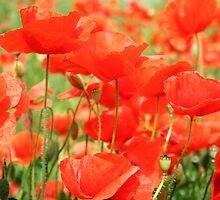 Poppy14 by Marianne17