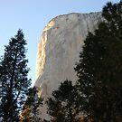 In Yosemite NP II by loiteke