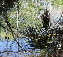 Swamp Reflections by Carol Bailey White