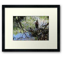 Swamp Reflections Framed Print