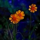 Wildflowers by Kim Roper