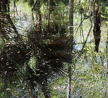 More Swamp Reflections by Carol Bailey White