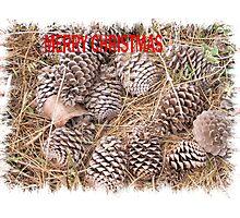 Pine-cone Christmas. Photographic Print