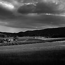 Vineyard Sunset in Black and White by natureshues