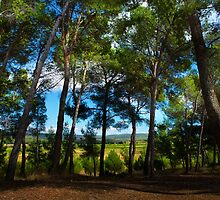 French Woodland by Dave Hare