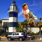Large Hummingbird Spotted in Shem Creek by imagetj