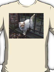 Fluffy Kitty T-Shirt