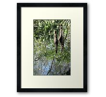 Yet Another Swamp Reflection Framed Print