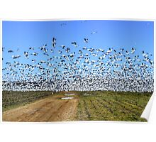 Snow Geese Migration Poster